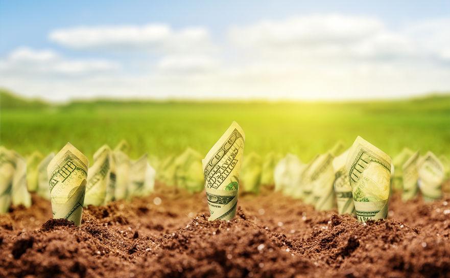 Organic Business Profits