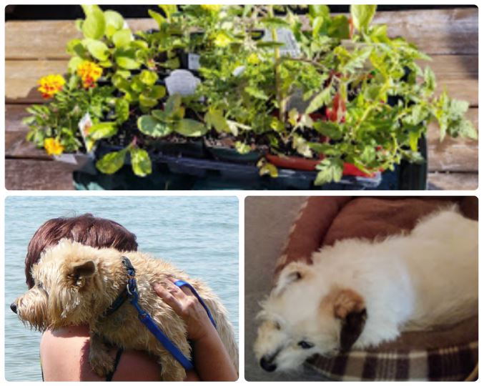 Carol Slott garden pets dog